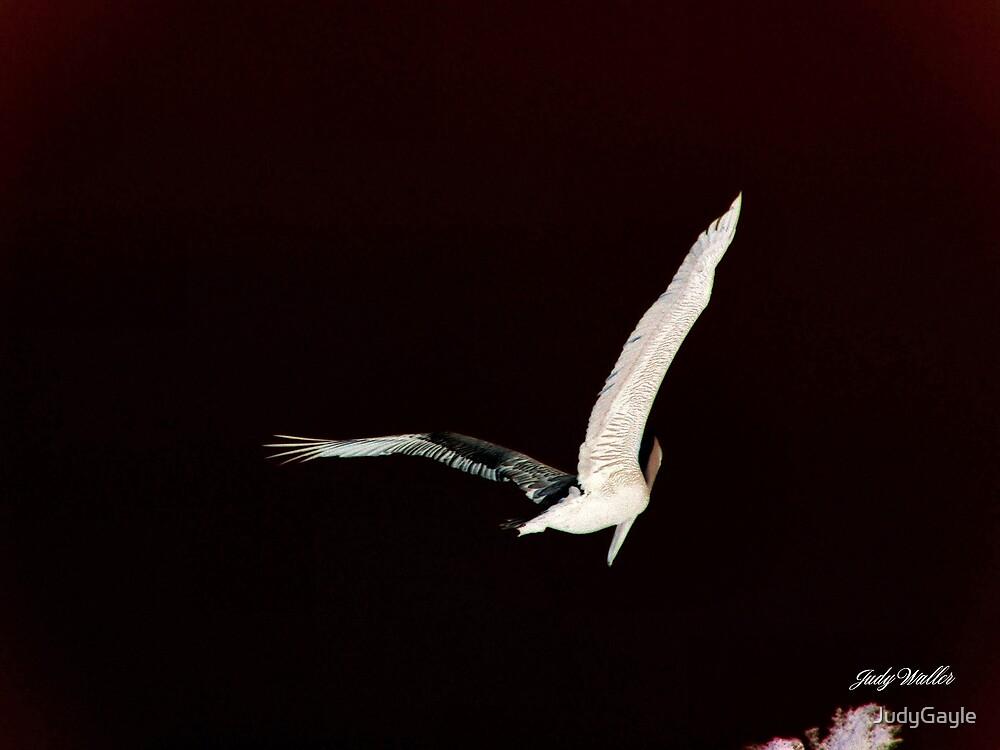 Pelican In Flight by Judy Gayle Waller