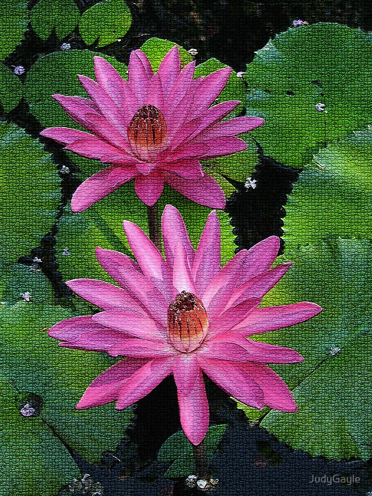 Pink Water Liles by Judy Gayle Waller