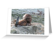 Stellar Sea Lion Greeting Card