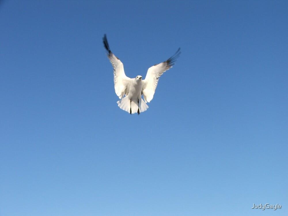 In Flight by Judy Gayle Waller