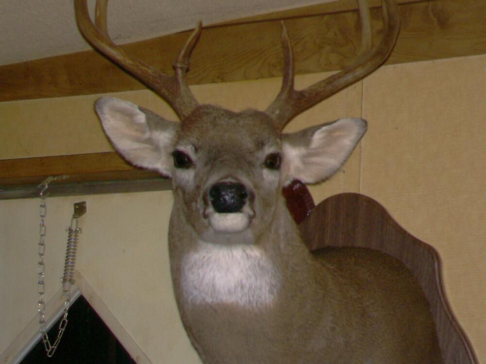 Deer! by volcomgrl17