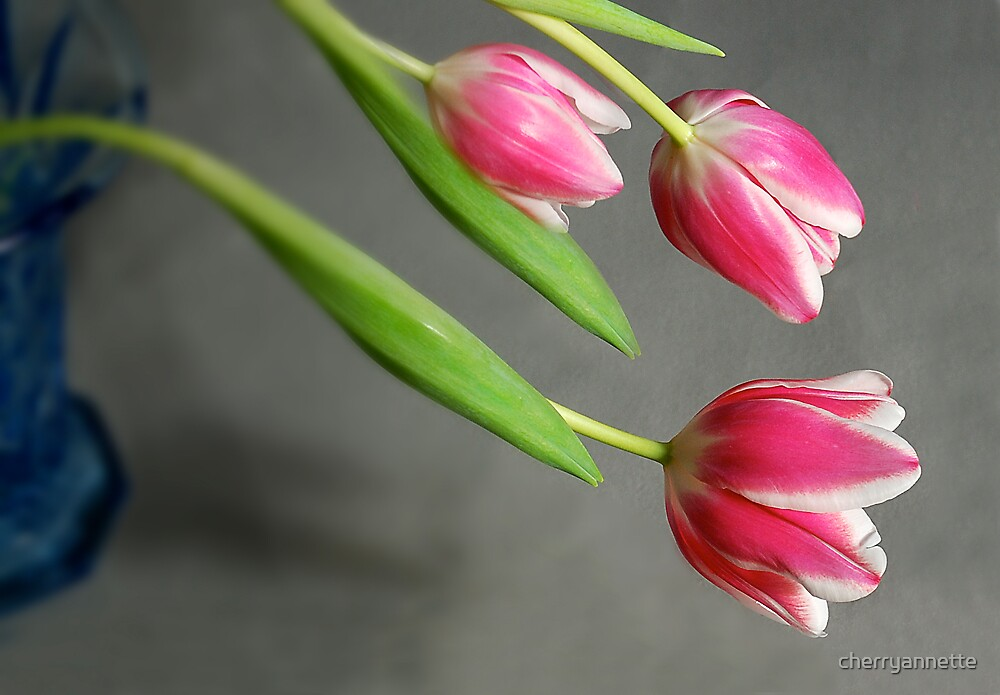 tulips in blue vase by cherryannette