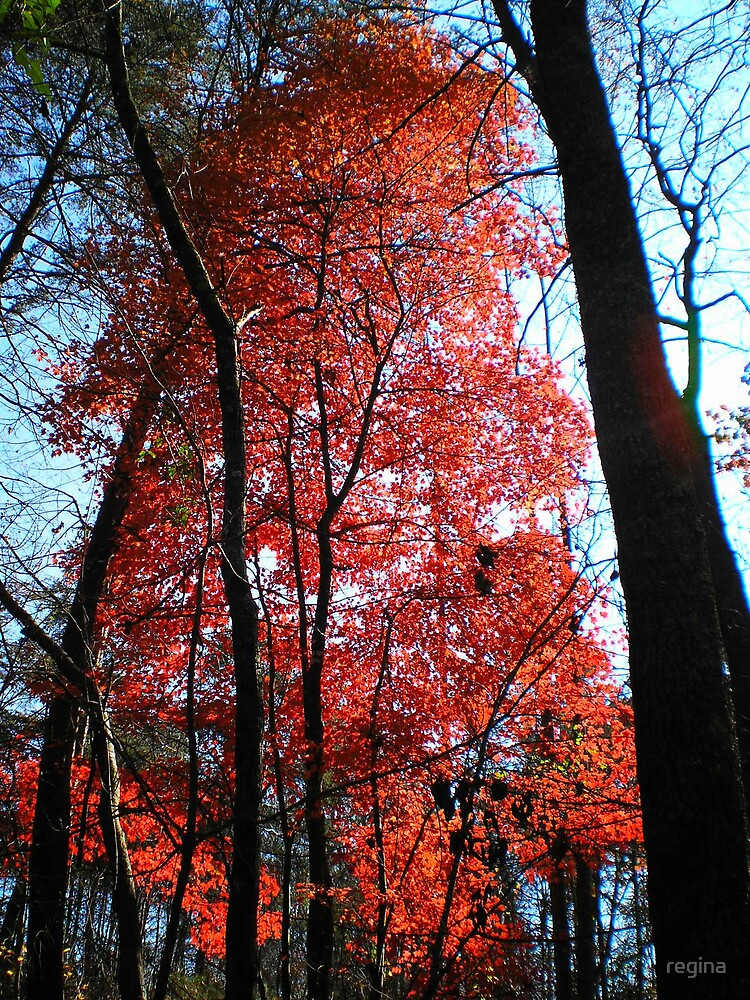 red maple  by regina