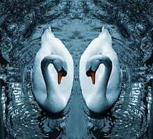 Swan III by shane22