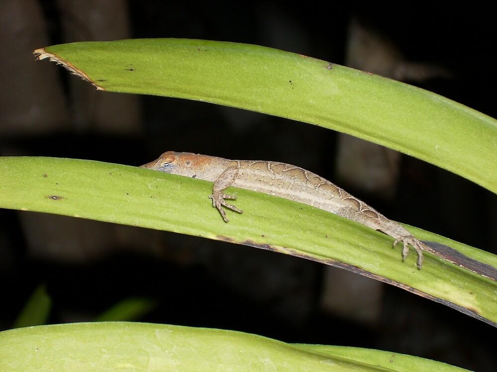 Sleeping Lizard on Orchid Leaf by Lynne