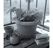 Flower Pot Photographic Print
