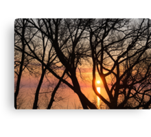 Sunrise Through the Chaos of Tree Branches Canvas Print