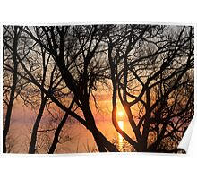 Sunrise Through the Chaos of Tree Branches Poster