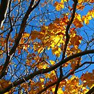Sunny Orange Leaves with Branches by Pamela Burger