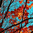 Sunny Red Leaves with Branches by Pamela Burger