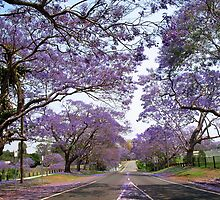Jacaranda Road by DigitalDelights