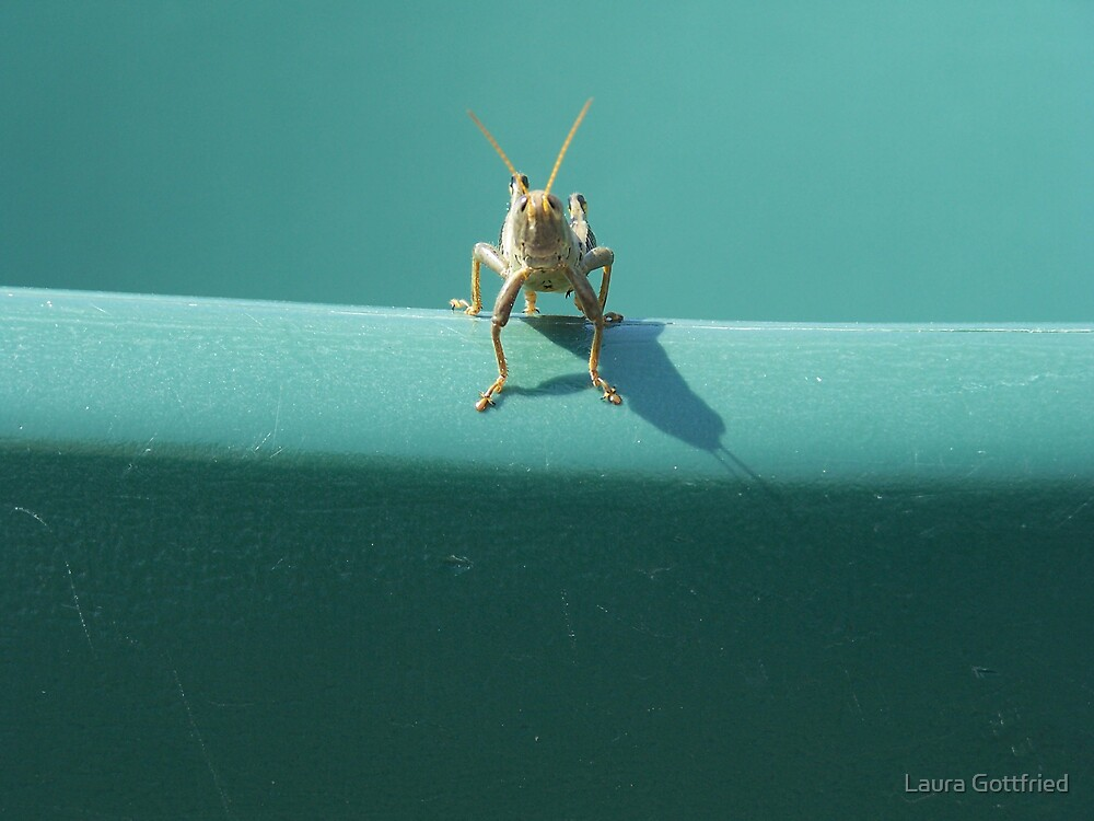 grasshopper  by Laura Gottfried