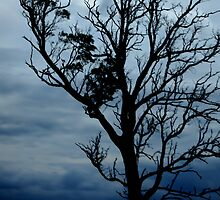 Storm Tree, Victoria, Australia by Joanne Patterson