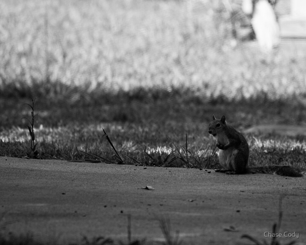 Relaxed Squirrel by Chase Cody