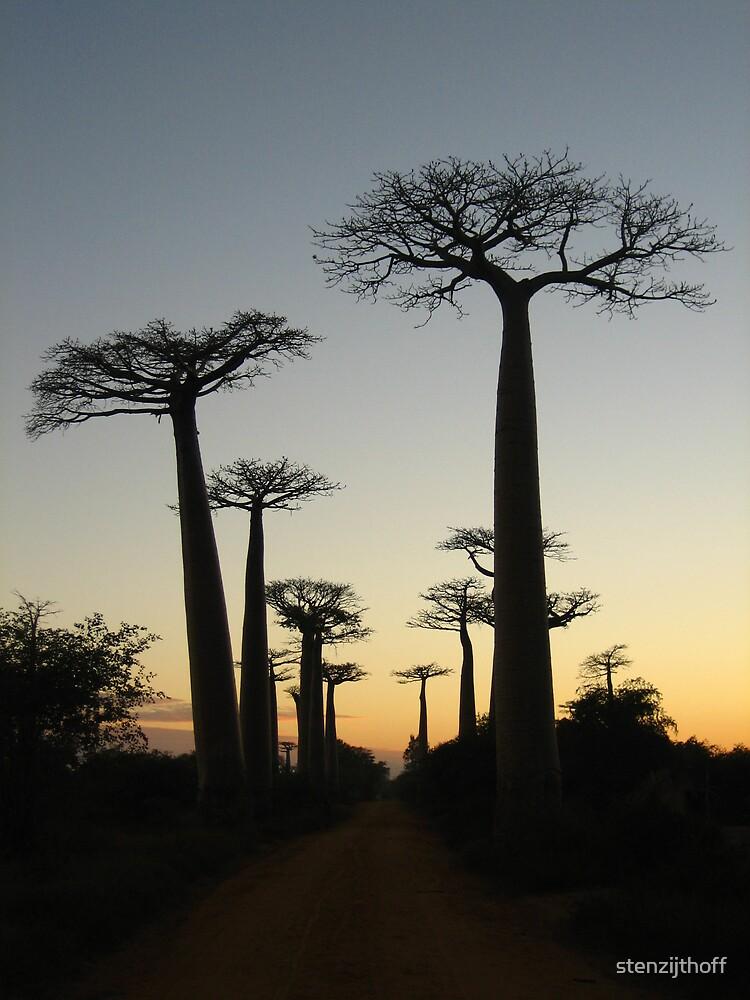 Avenue des Baobabs by stenzijthoff
