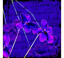 Violaceous Photographic Print