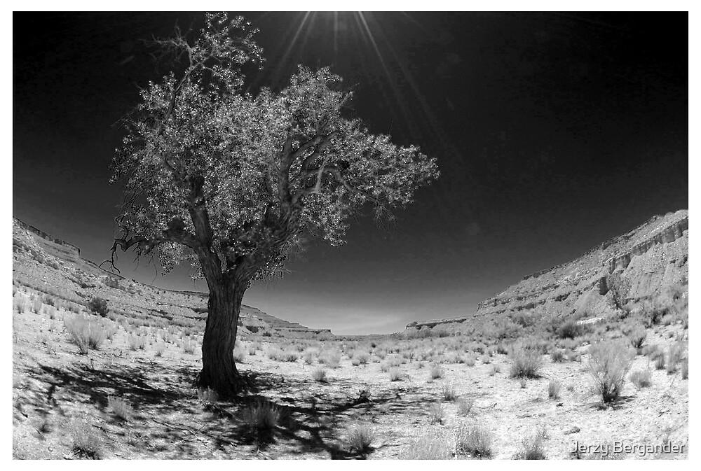 Desert 3 by Jerzy Bergander