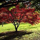 Autumn glory by Joyce Knorz