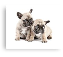 Frenchie Puppy Pals Canvas Print