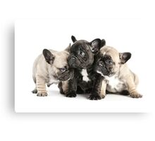Frenchie Pals Canvas Print
