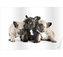 Frenchie Pals Poster