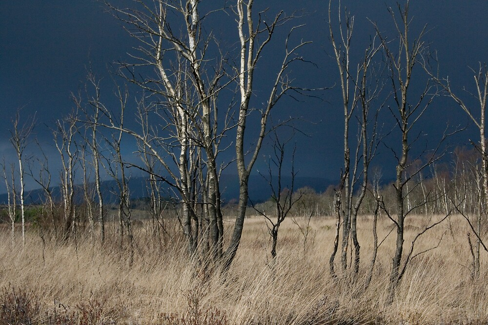 Twigs and Light by Kevin Hart