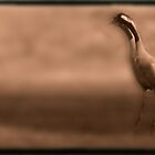 Cranes 1 by Angelika  Vogel