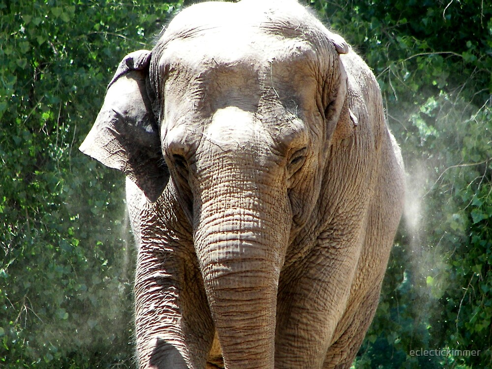 Elephant by eclectickimmer