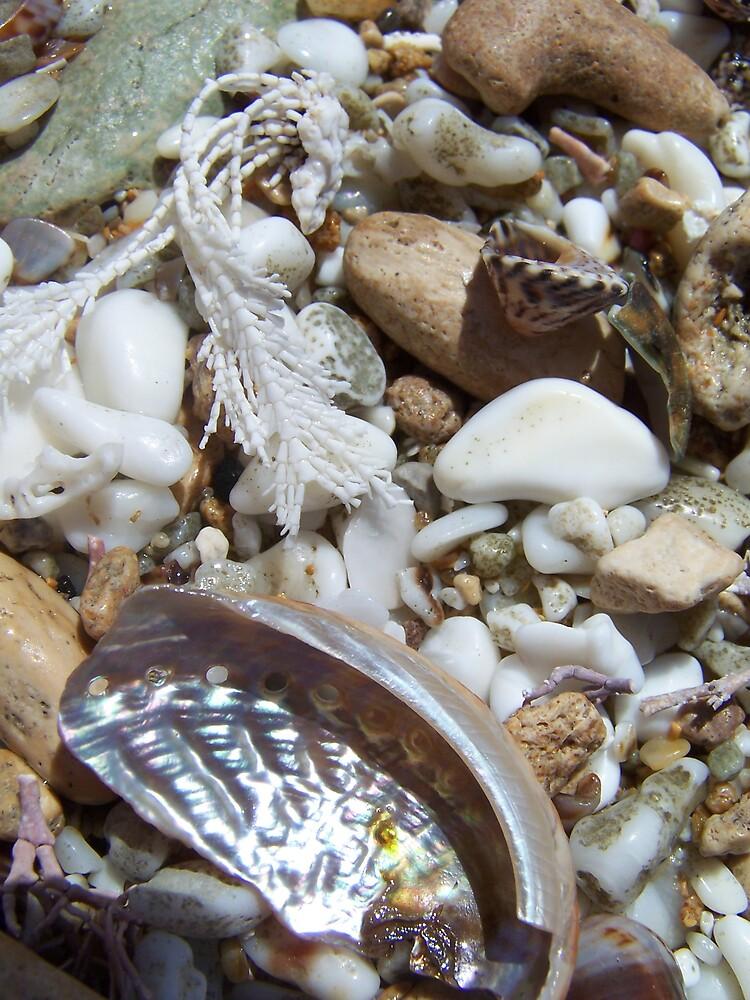Shelly Beach by MeganJayne