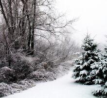 Snowy Evergreens Christmas Card by Pamela Burger