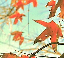 Autumn Dance of Red Leaves by yendesigns