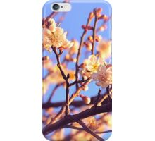 Exquisite Cherry Blossoms iPhone Case/Skin