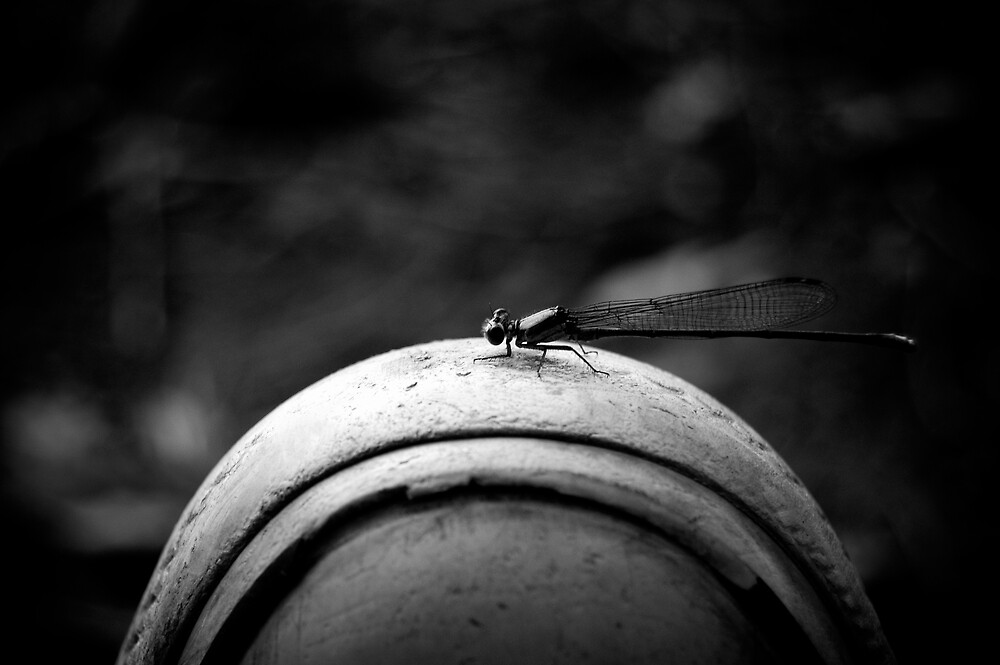 He Landed On My Shoe by Justin Leveque