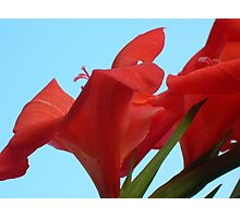 Flame Gladioli On Blue Sky Photographic Print
