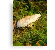 White Toadstool 6 Canvas Print