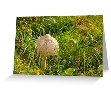 White Toadstool 8 Greeting Card