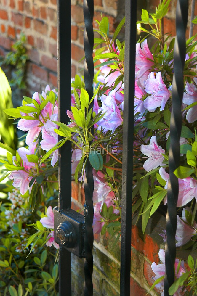 Gated Flowers by Charlie