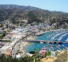 Catalina Island by Debbie Buckner