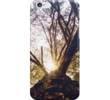 Bottom View of Pine Tree 3 iPhone Case/Skin
