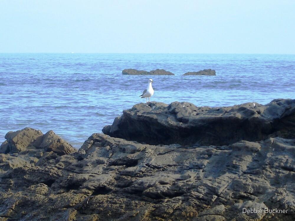 Laguna Beach Seagull by Debbie Buckner