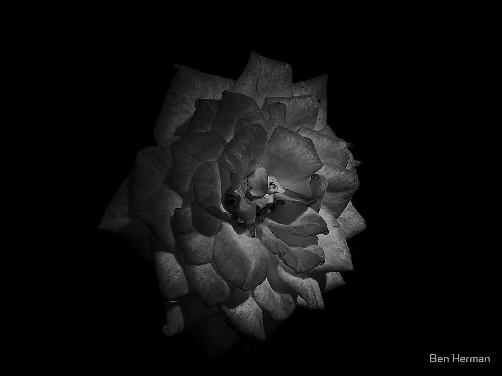 Black Rose by Ben Herman