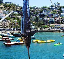 Catalina Swordfish by Debbie Buckner