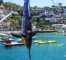 Catalina Swordfish by Debbie Buckner