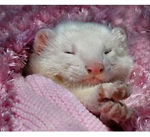 Snoozing Ferret Photographic Print