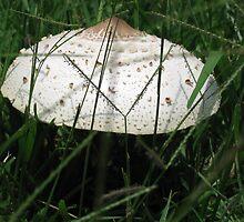 mushroom of peace by tatran