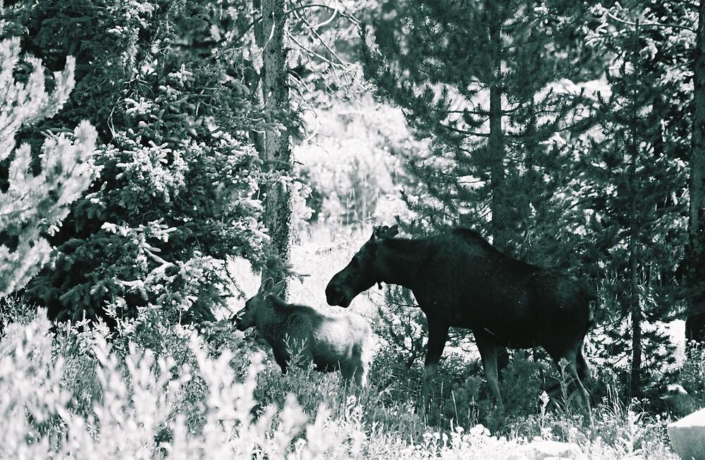 Uinta Moose by sillumgungfu