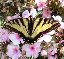 OR Butterfly  by Debbie Buckner