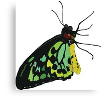 Vector Butterfly Canvas Print