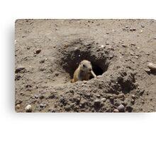 Prairie Dogs V Canvas Print