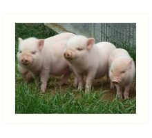 Hill 60 Pigs Art Print